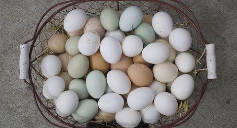 بيضة واحدة يوميًا تحميكم من شبح السُكّري.. كيف؟