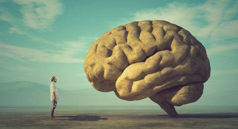 الدماغ البشري يعمل بشكل عكسي لاستعادة الذكريات!