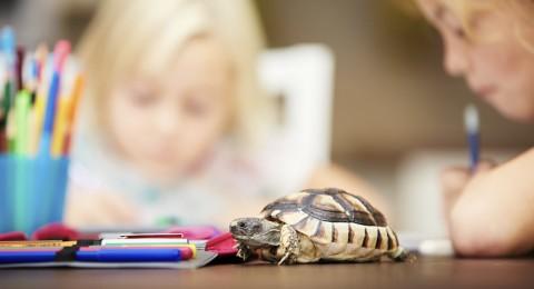 احذروا .. وجود السلاحف بالمنازل والمدارس قد يصيبكم بالعدوى