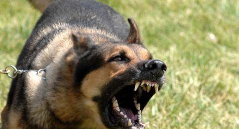 حيوانات هاربة من سوريا تحمل معها داء الكلب لمنطقة الجولان !