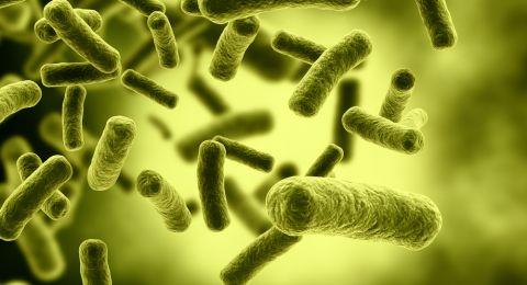 إحذروا البكتيريا الخبيثة..أكثر فتكا بالبشر من السرطان