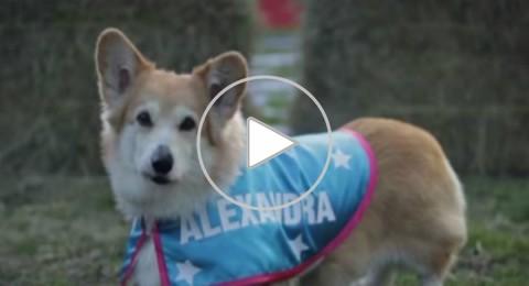 فيديو: مسابقة كلاب لاختيار اسم مولود الأمير ويليام