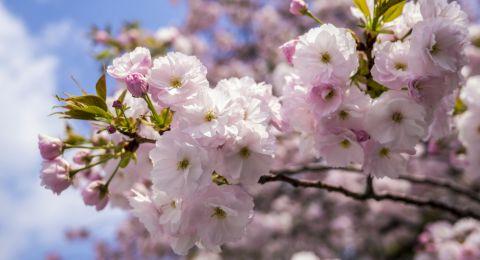 الطقس: درجات الحرارة ترتفع وأجواء ربيعية لطيفة