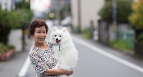الكلاب اليابانية تشخص المصابين بالسرطان