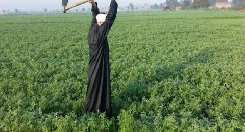 مصر تشهد حدثا زراعيا غير مسبوق في تاريخ الزراعة