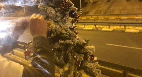 ردًا على احراق شجرتي الميلاد .. نصب اكثر من 30 شجرة ميلاد في الجديدة المكر
