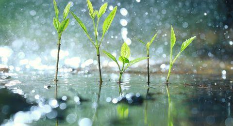 الطقس: أجواء شديدة البرودة وأمطار غزيرة اليوم