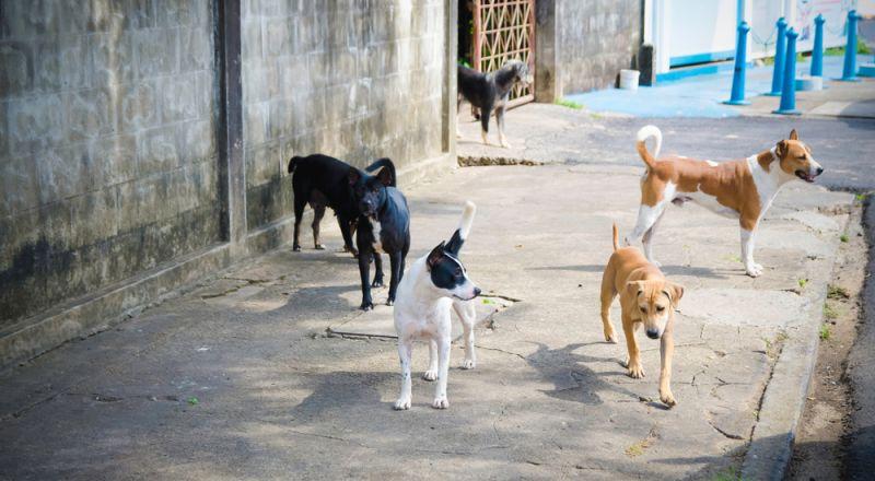 انتشار أكل لحوم الكلاب في الأردن يثير سخطا على مواقع التواصل