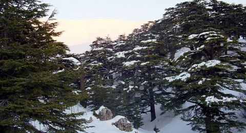 التغير المناخي يهدد ارز لبنان بالدمار!