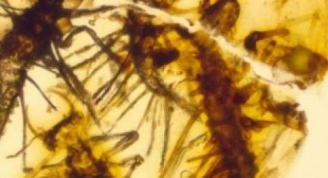 اكتشاف علمي نادر داخل قطعة عنبر
