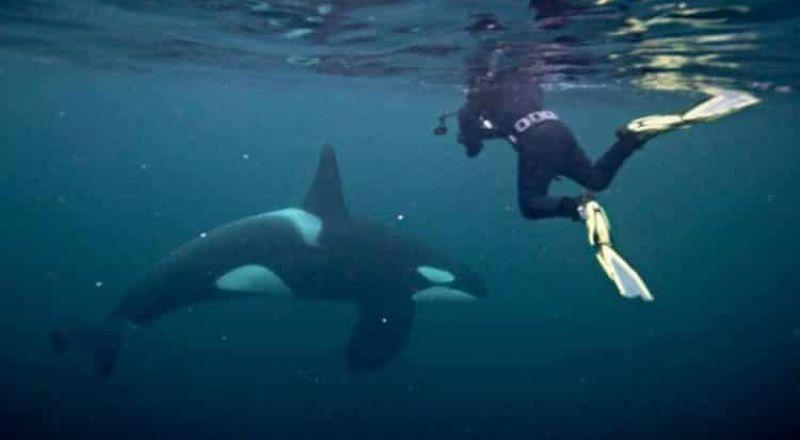 حوت عملاق كاد يبتلع مصور تحت الماء مع وجبته من الأسماك