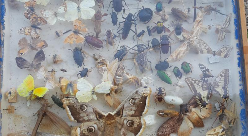 هجرة الحشرات