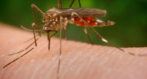 إسرائيل: ست حالات (حتى الآن) من حمى النيل الغربي