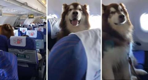 راكب من نوع خاص يستقل رحلة للخطوط الجوية الصينية