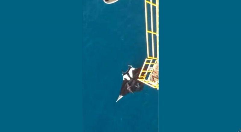 رصد مخلوق بحري عملاق