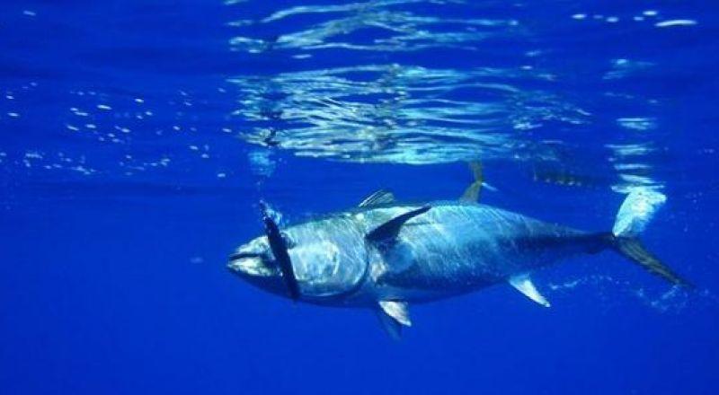 غزة.. فلسطينيون يصطادون سمكة