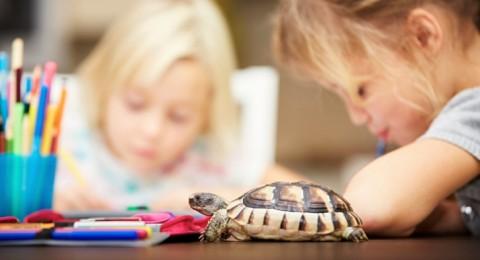 وجود السلاحف بالمنازل والمدارس قد يصيب بالسالمونيلا