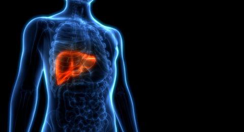 خلايا في الكبد قد تغني عن عمليات الزراعة... اليكم التفاصيل!