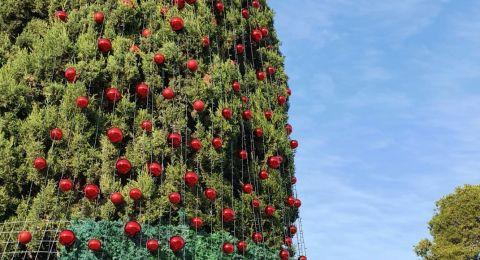 اليوم: إضاءة شجرة الميلاد في الناصرة .. شاهدوا الحفل مباشر عبر