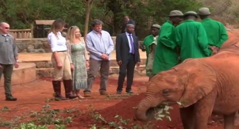 فيل يهاجم ميلانيا ترامب ويدفعها بقوة في كينيا