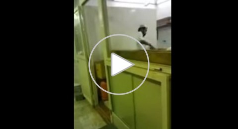 السعودية: خباز