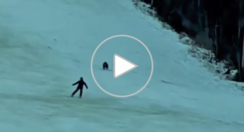 دب يطارد متزلج على الجليد: كأنها مغامرة شرسة في فيلم كرتون
