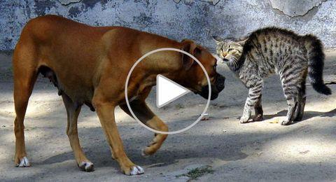بالفيديو ..القطة